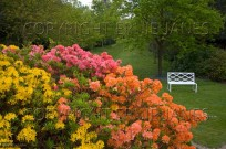 Azaleas in Bloom & Garden Seat (EAJ009305)