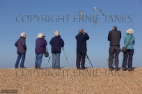 Birdwatching at Cley Nature Reserve Norfolk (EAJ010741)