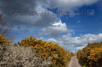Country Lane Salthouse Heath (EAJ009644)
