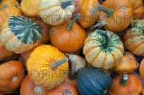 Harvested mixed squashes on display Autumn (EAJ010709)