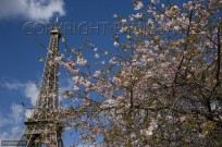 Eiffel Tower Paris France Spring (EAJ009117)