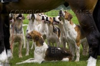 Fox Hound Pack from The Craven Hunt (EAJ009529)