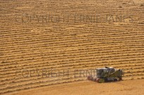 Wheat Harvest Buckinghamshire August (EAJ009050)