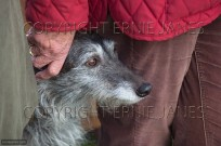 Portrait of Lurcher and owner (EAJ009541)