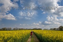 Path through Oilseed Rape Field Norfolk April (EAJ009223)
