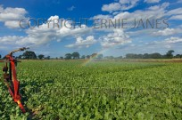 Irrigating Sugar Beet crop in drought conditions (EAJ009057)
