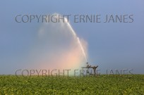 Irrigating Sugar Beet crop in drought conditions (EAJ009058)