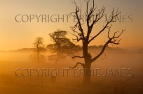 Sunrise over farmland at Felbrigg in winter (EAJ009660)