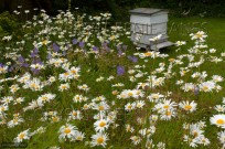 Traditional Bee Hive in Summer in cottage garden (EAJ010597)
