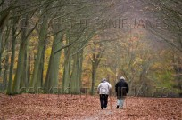 OAPs Walking at Victory Avenue Felbrigg Estate Norfolk UK Autumn (EAJ009669)