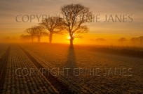 Arable and Oaks on a frosty sunrise Gimingham (EAJ011322)